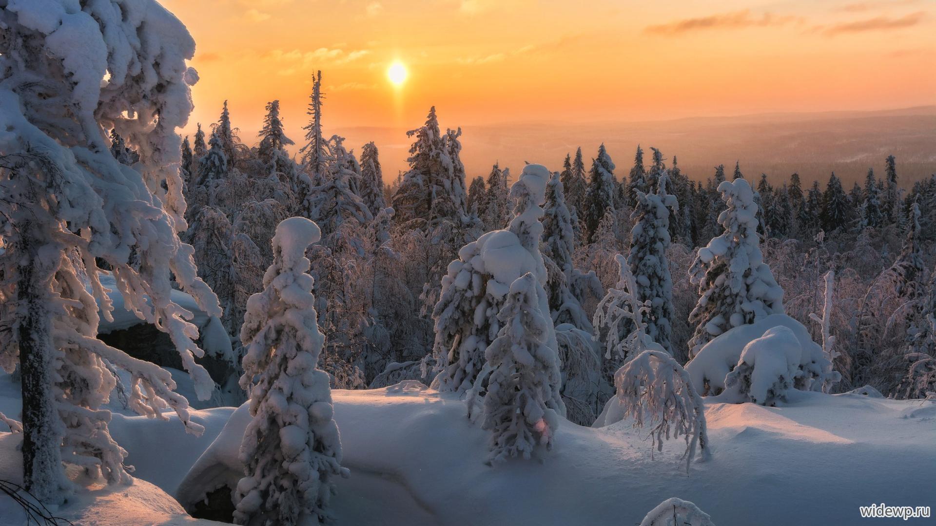 Обои На Рабочий Стол 1920х1080 Зимний Лес