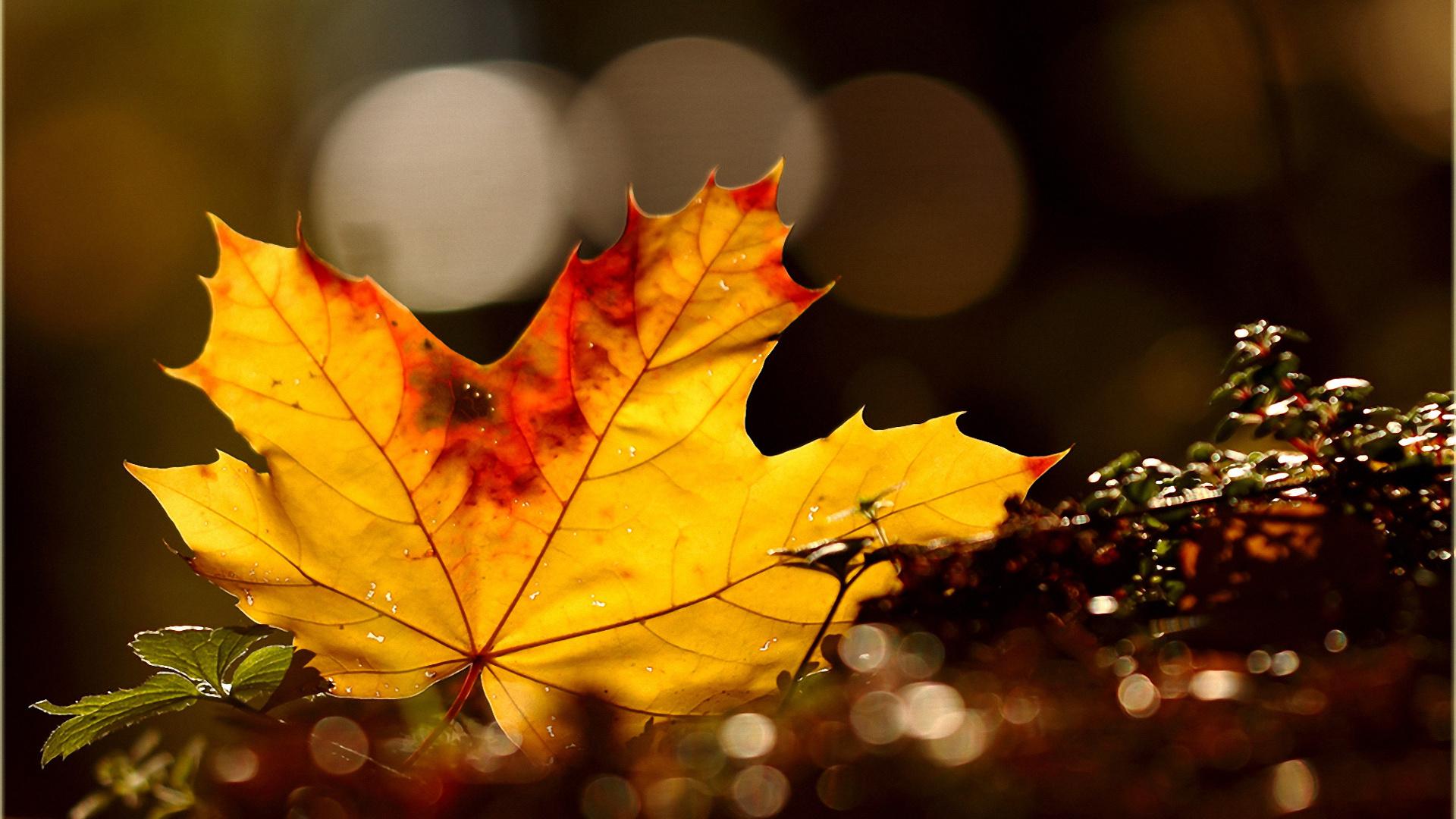 обои на рабочий стол осень листья дождь значит, что