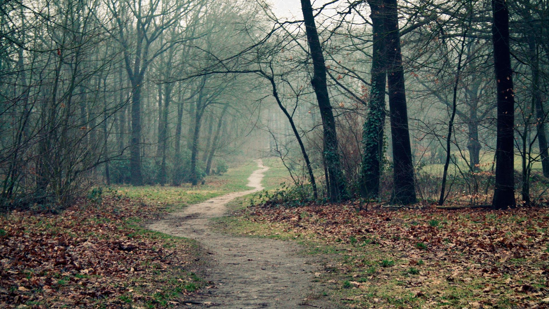 Картинка поздней осенью в лесу