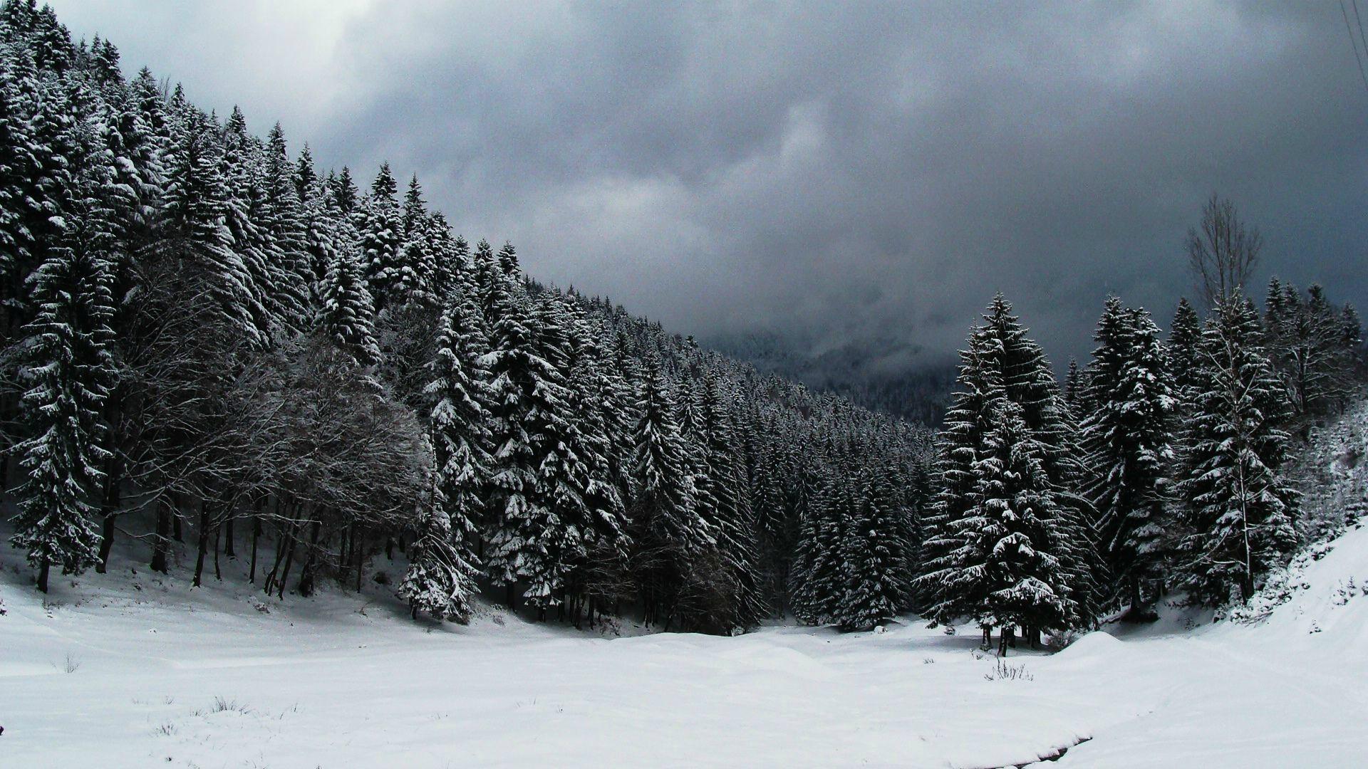 снежный лес обои на рабочий стол