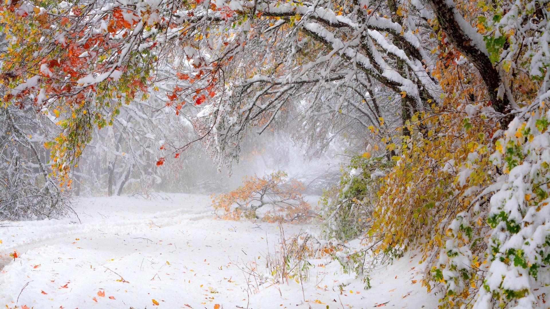 того, картинки первый снег и осень болезнь долго