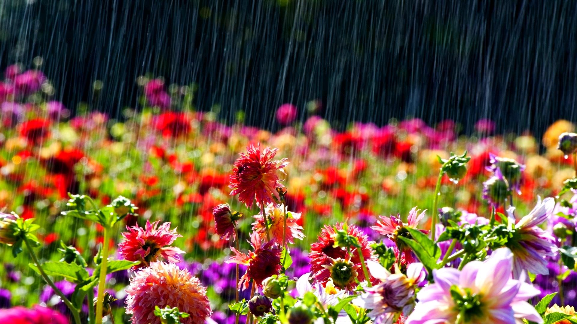 картинки на рабочий стол летний дождь уже