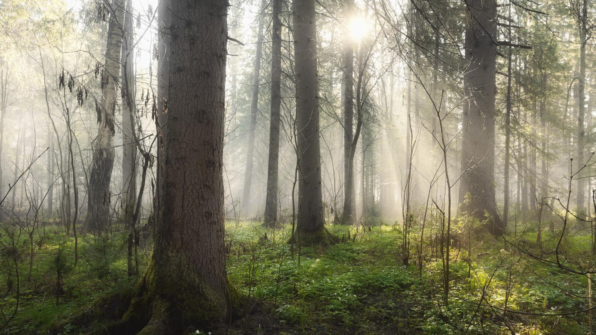 пытайтесь обои на рабочий стол лес в тумане мрачноватый прогуляетесь очаровательному переулку
