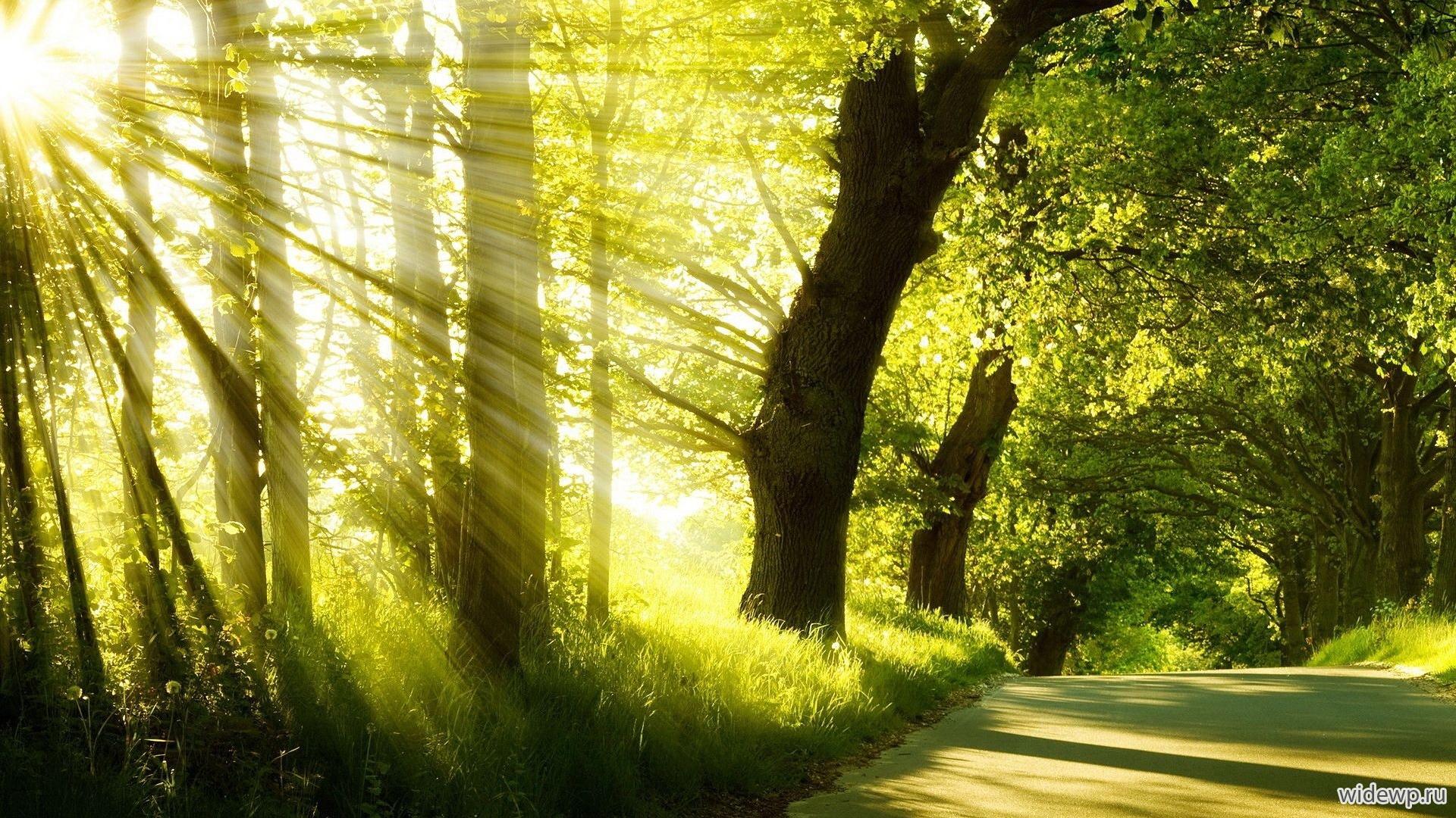 Картинки по запросу картинки восход солнца в лесу